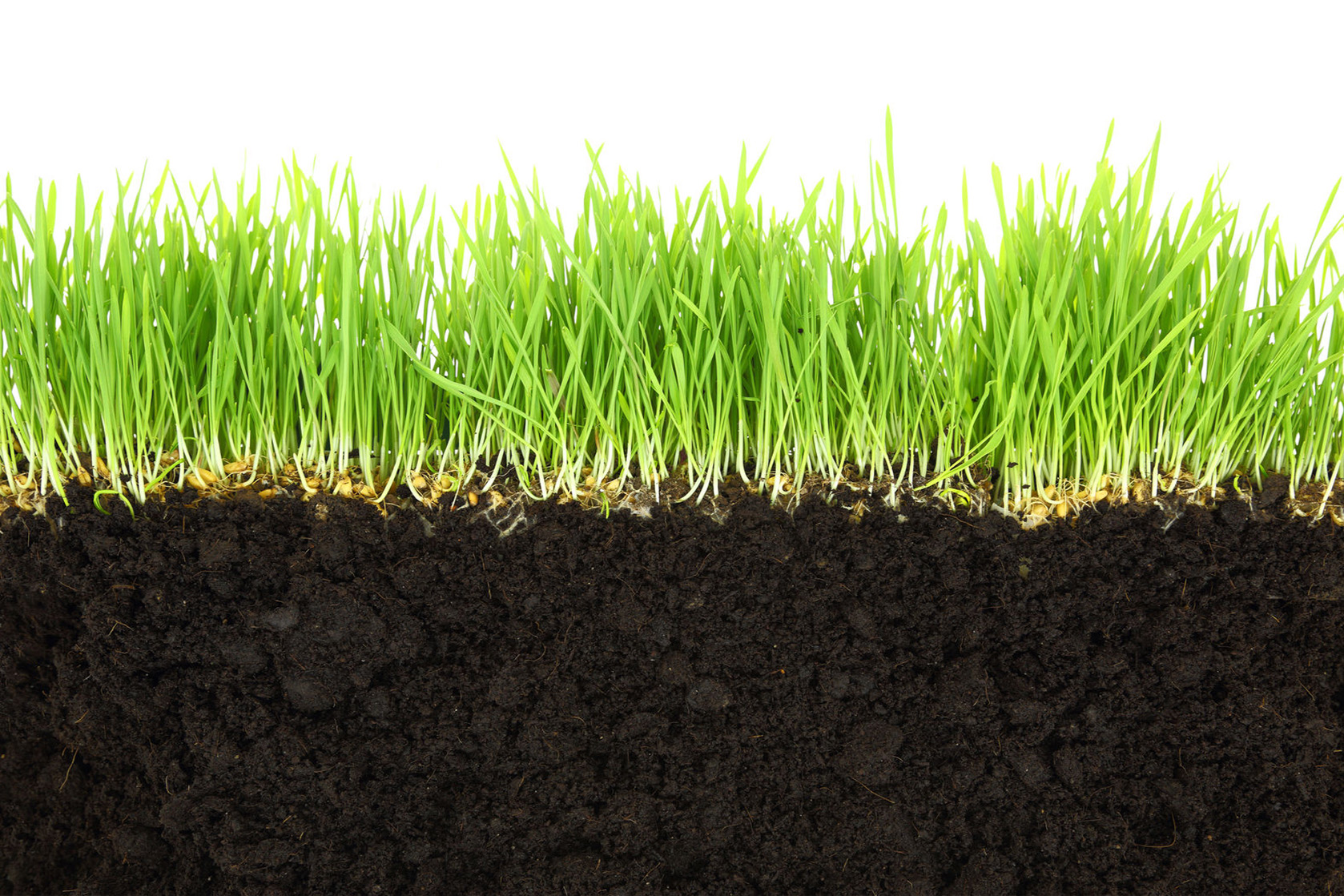 25603113 - cross-section of soil and grass isolated on white background