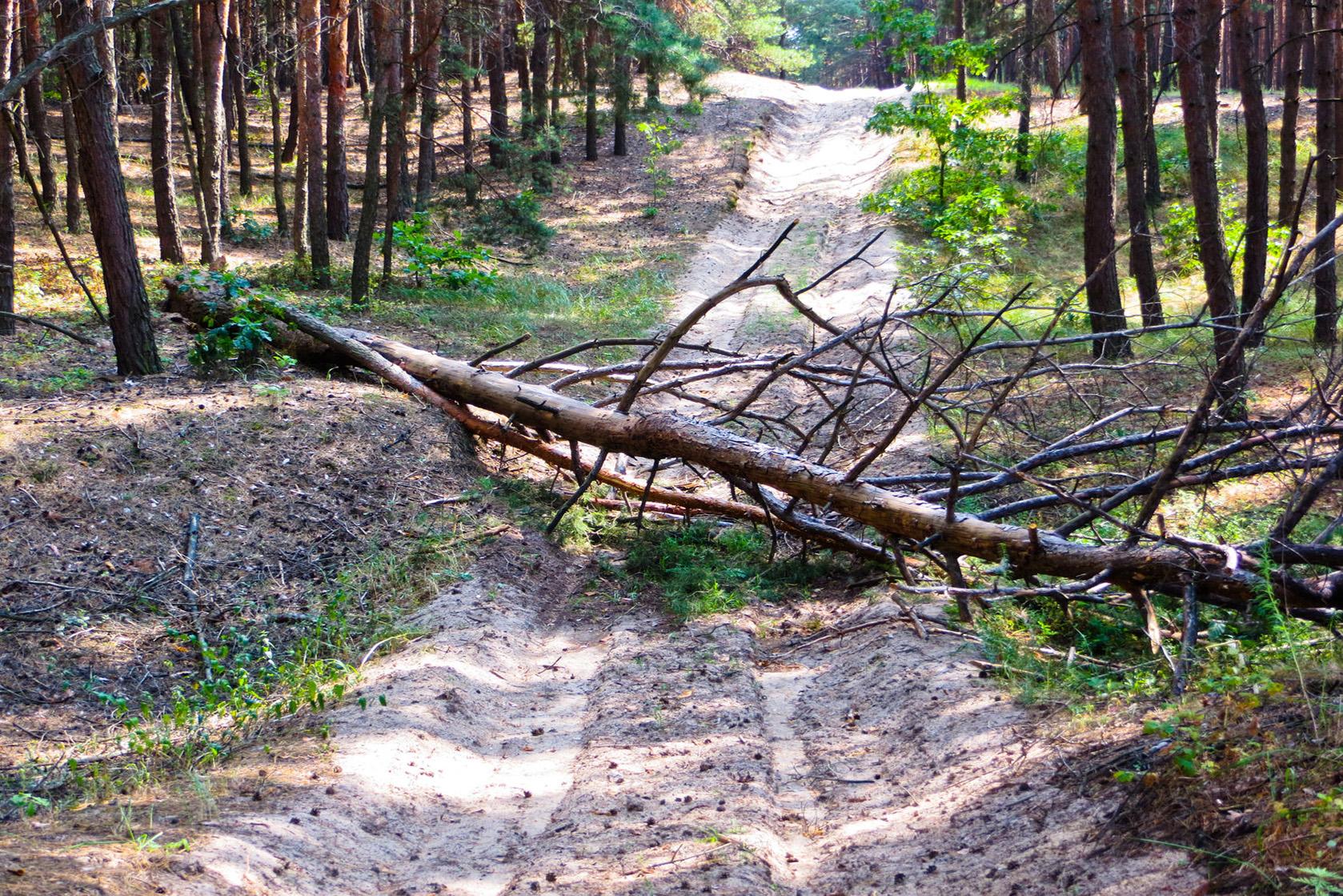 63218004 - the pine tree has fallen across the road