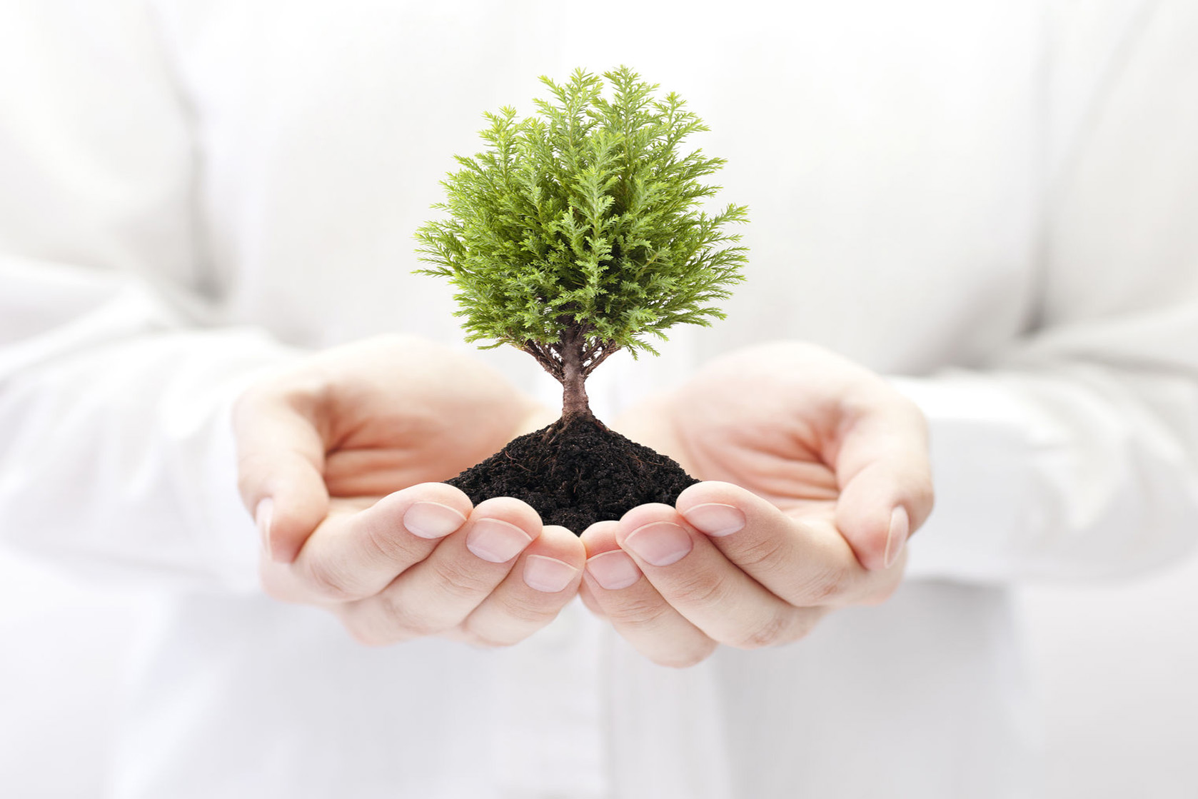 63995139 - growing green tree in hands